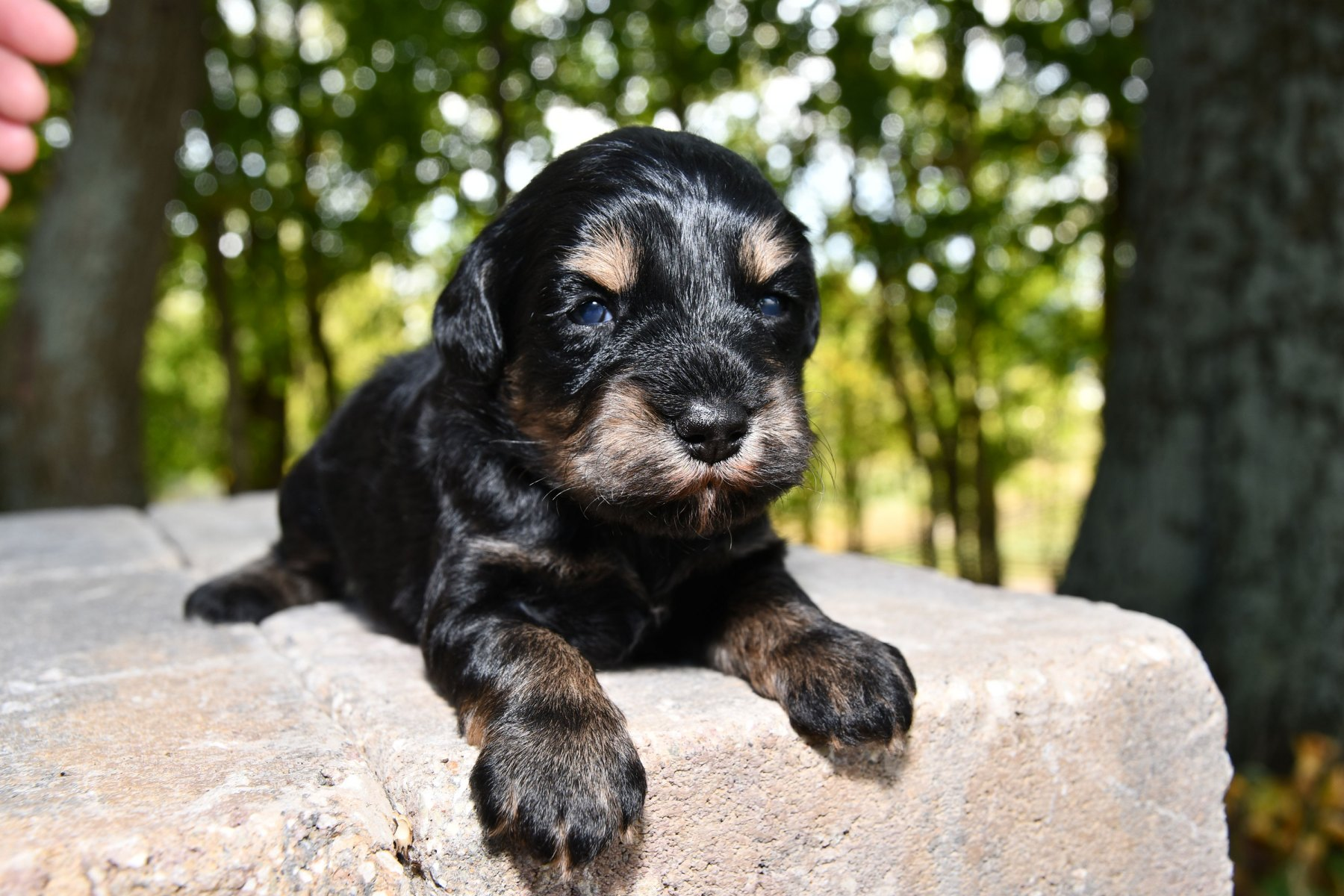 20190930_All-Pups-9-30_5923