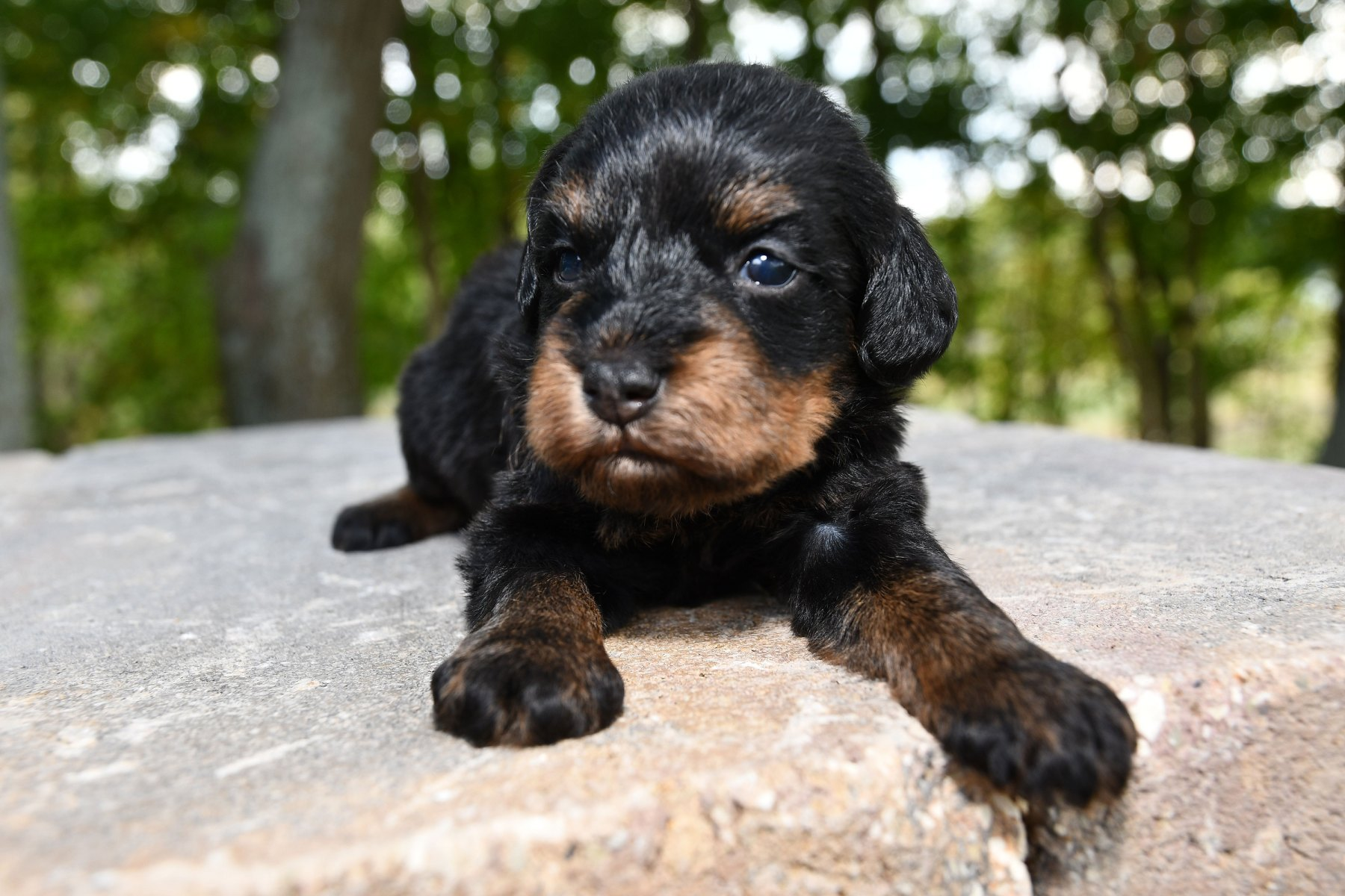 20190930_All-Pups-9-30_6012