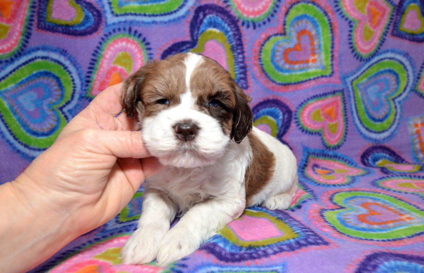 puppies-2-1-10_9386