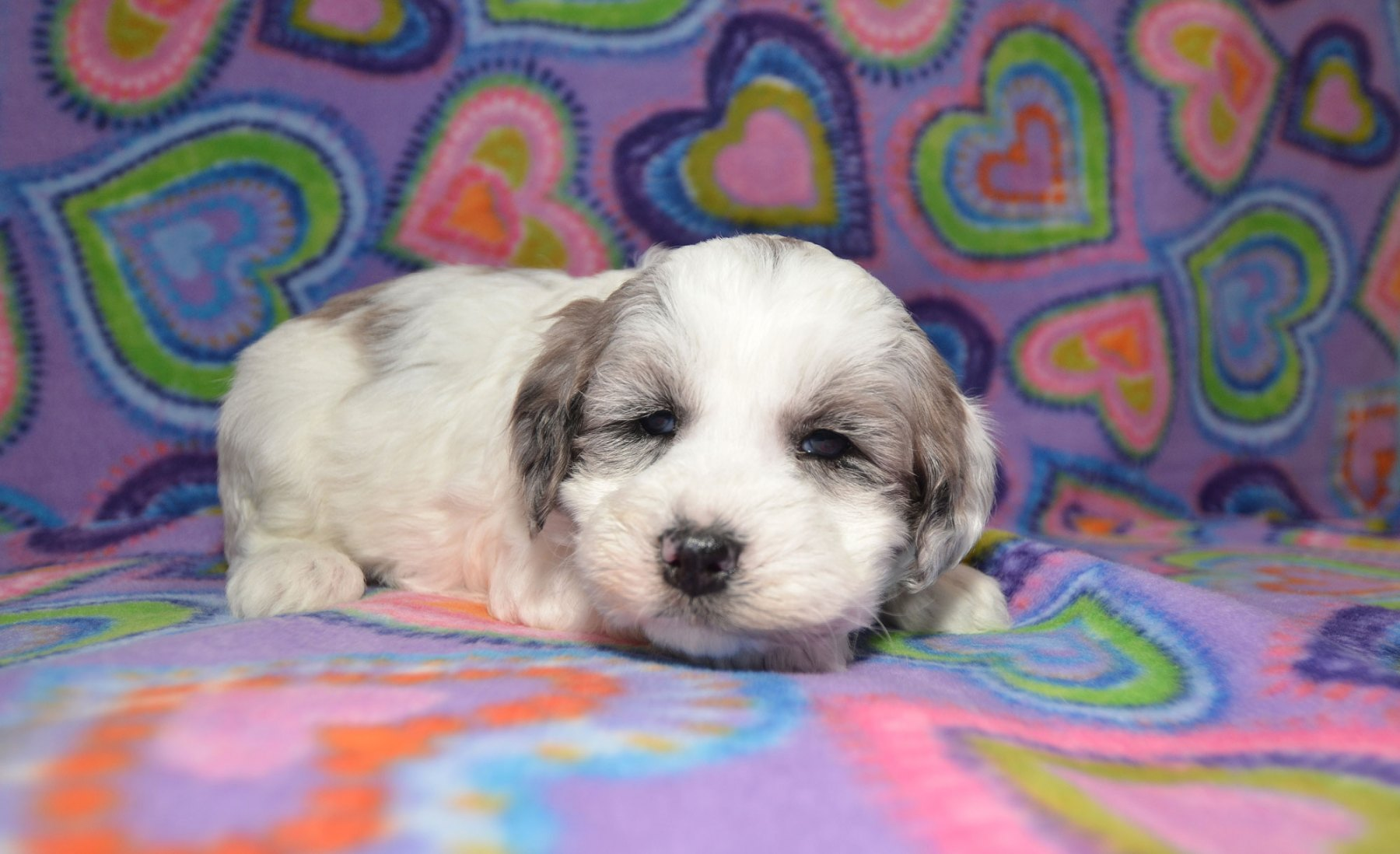 puppies-2-1-10_9454