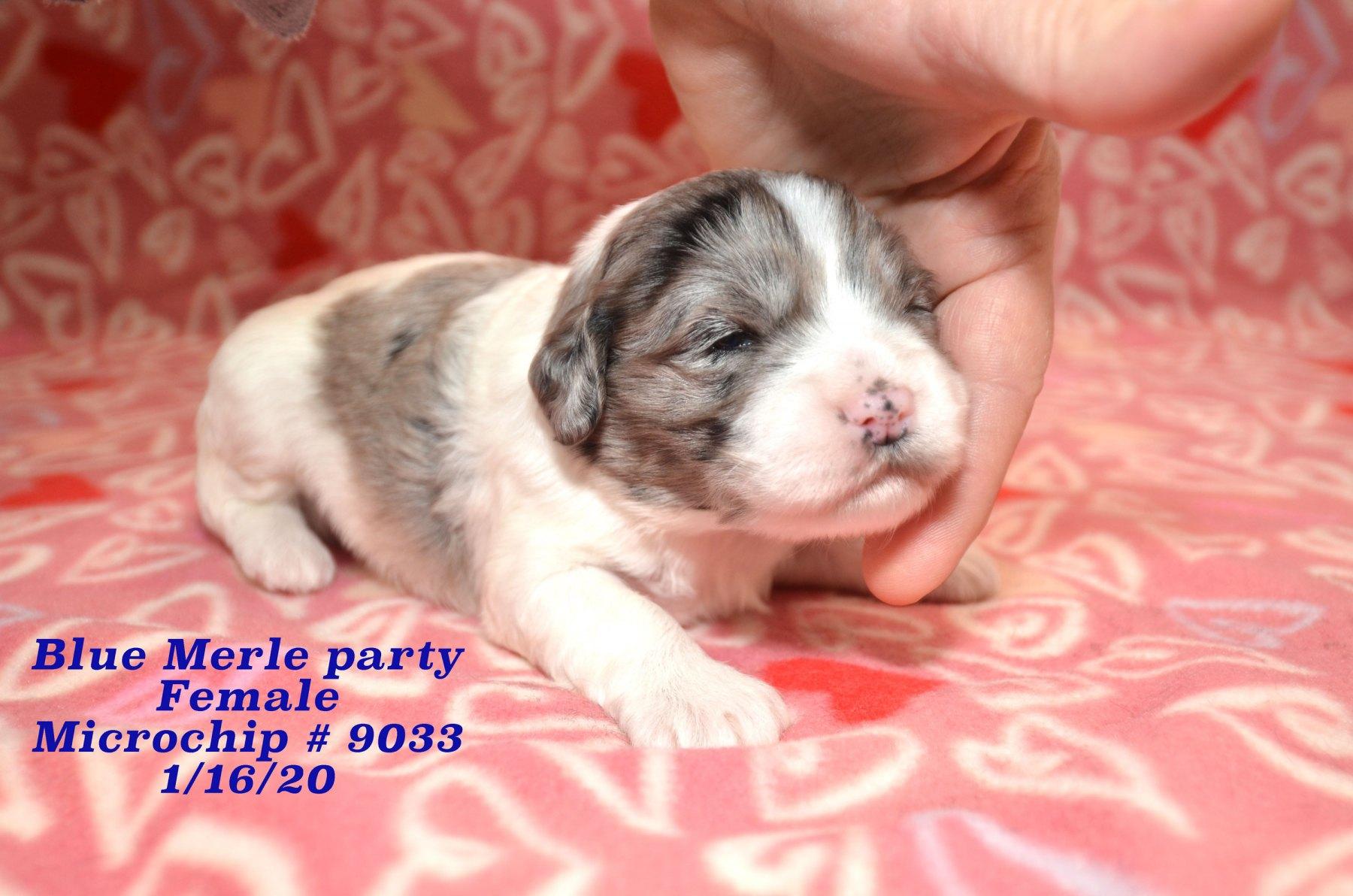 Divas-P-01152020_8285