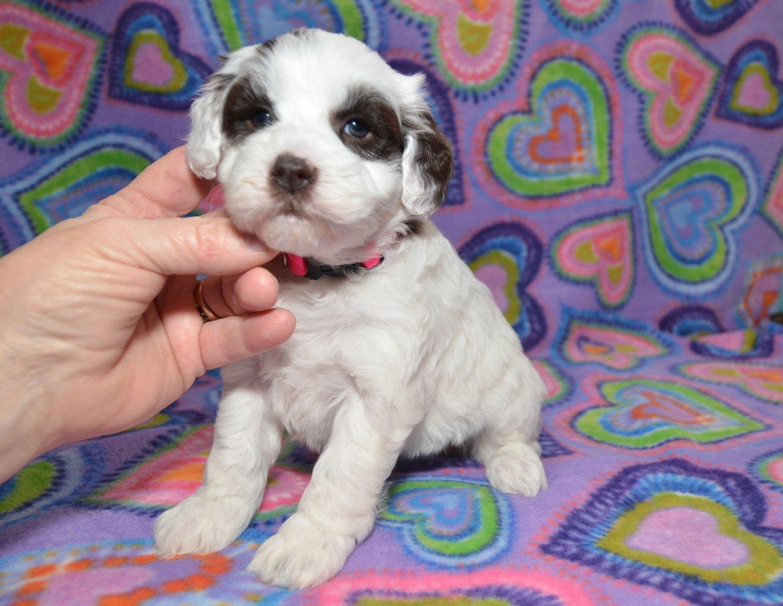 puppies-2-1-10_9403