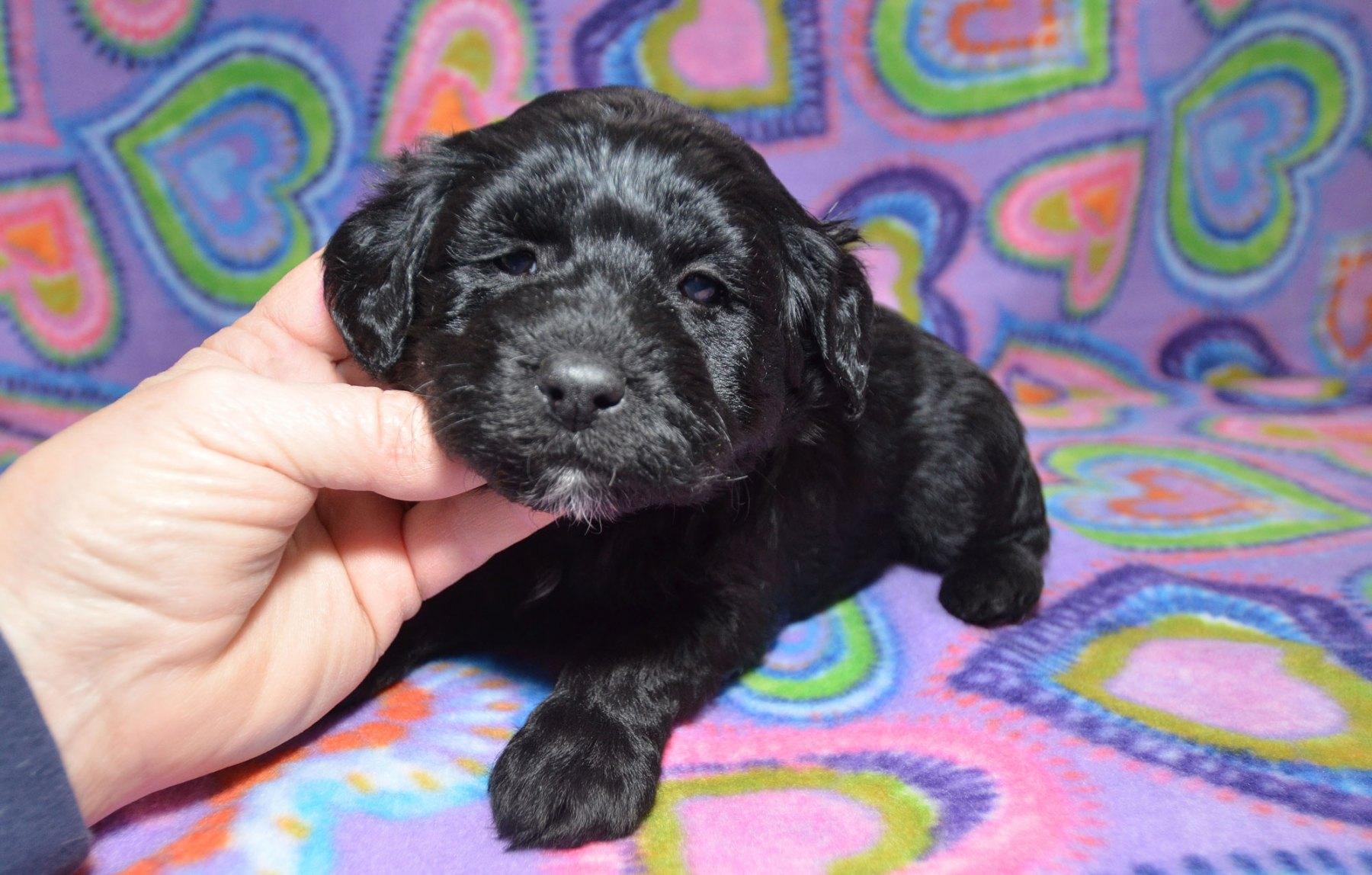 puppies-2-1-10_9429