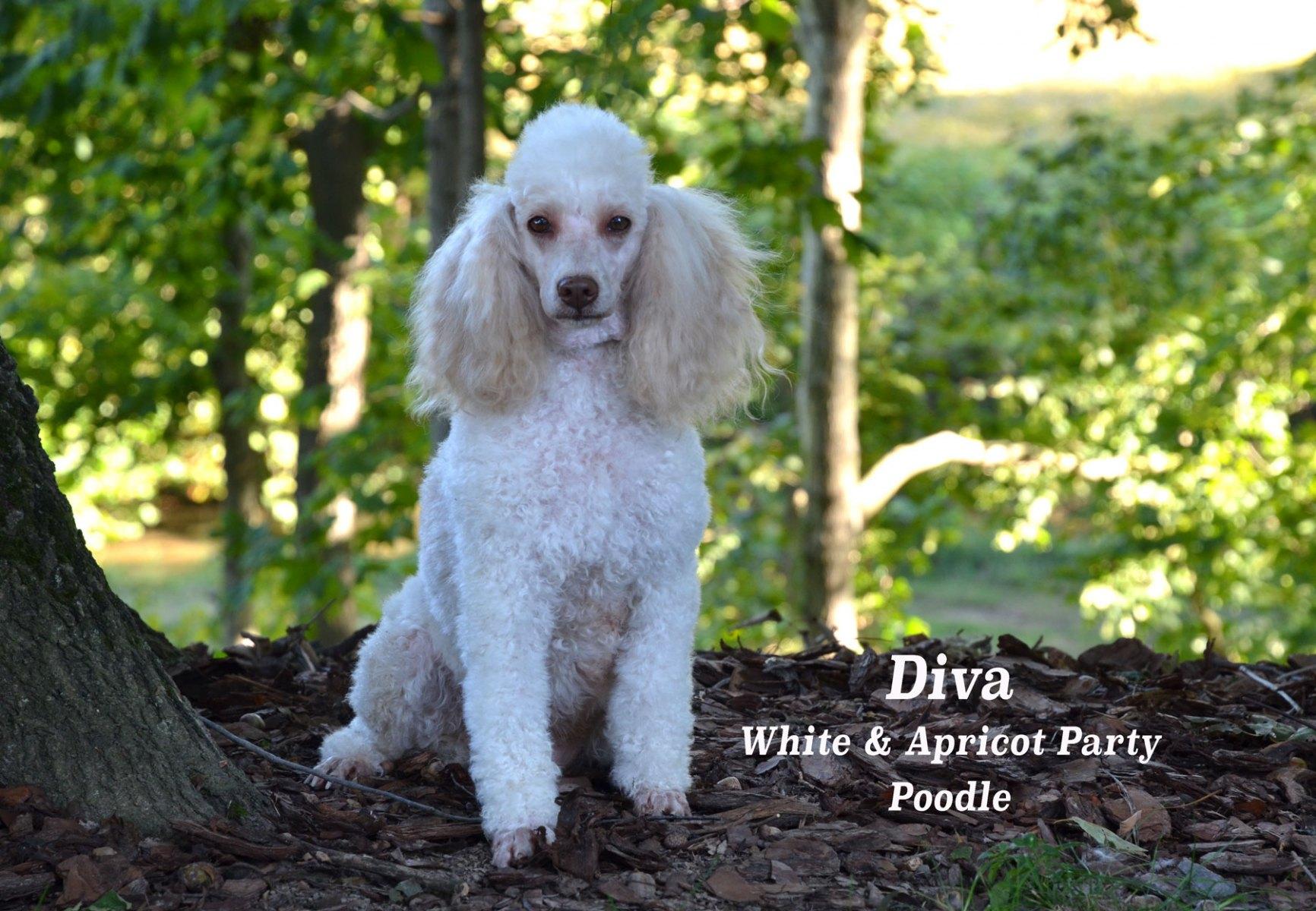 Diva-9-20_20200920_5697
