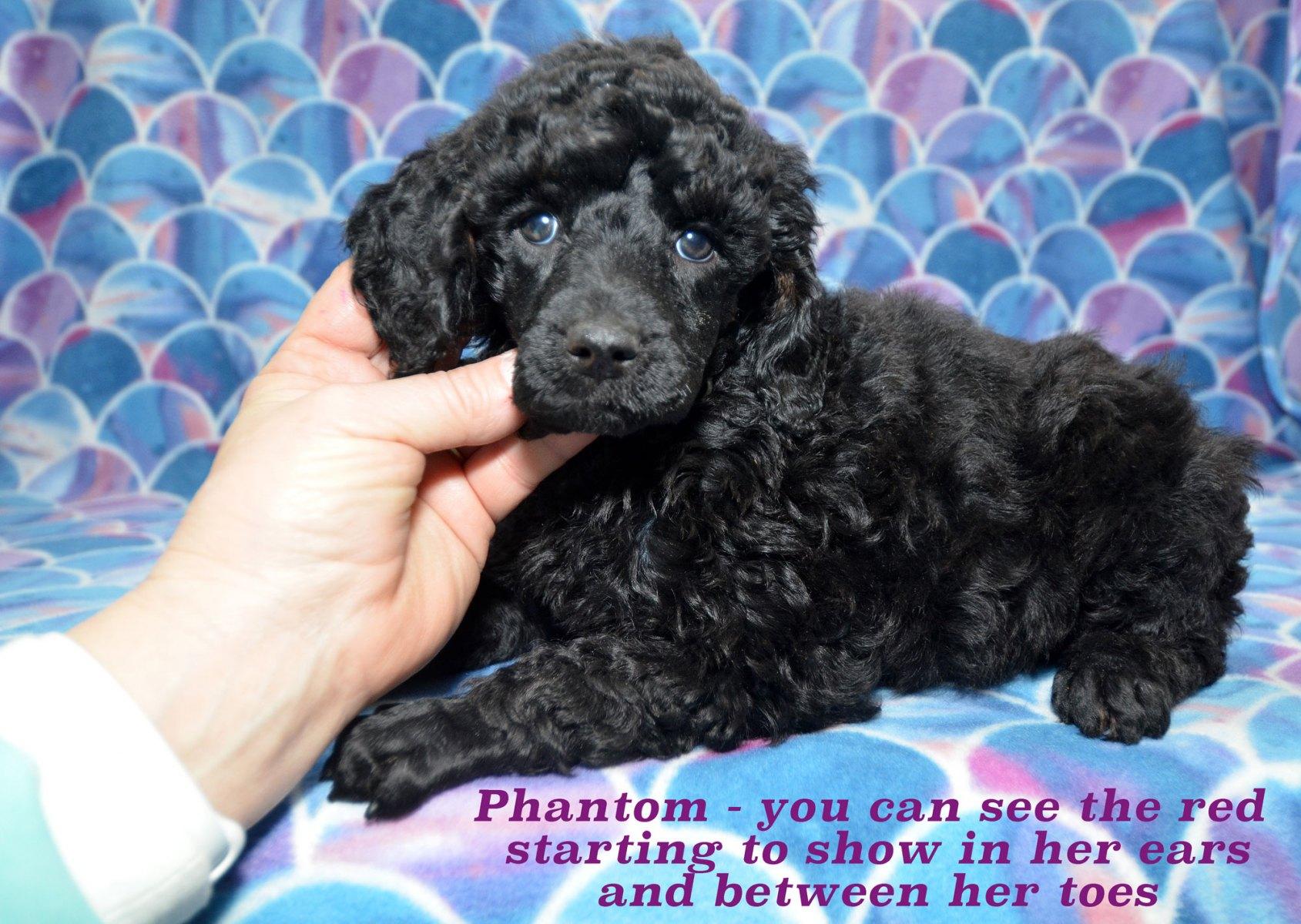 200214_pups-2-14_1099