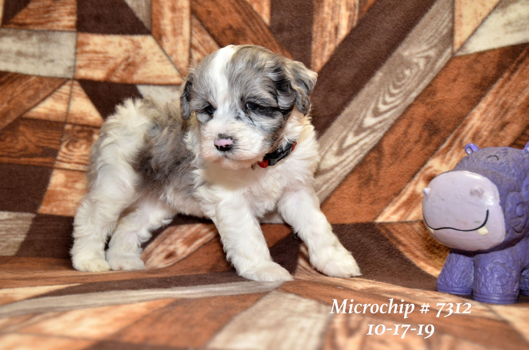 all-pups-10-15_2791