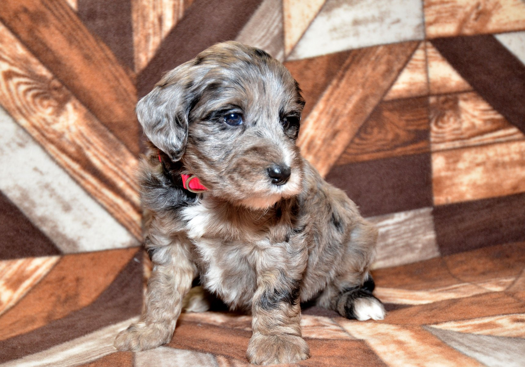 all-pups-10-15_2832