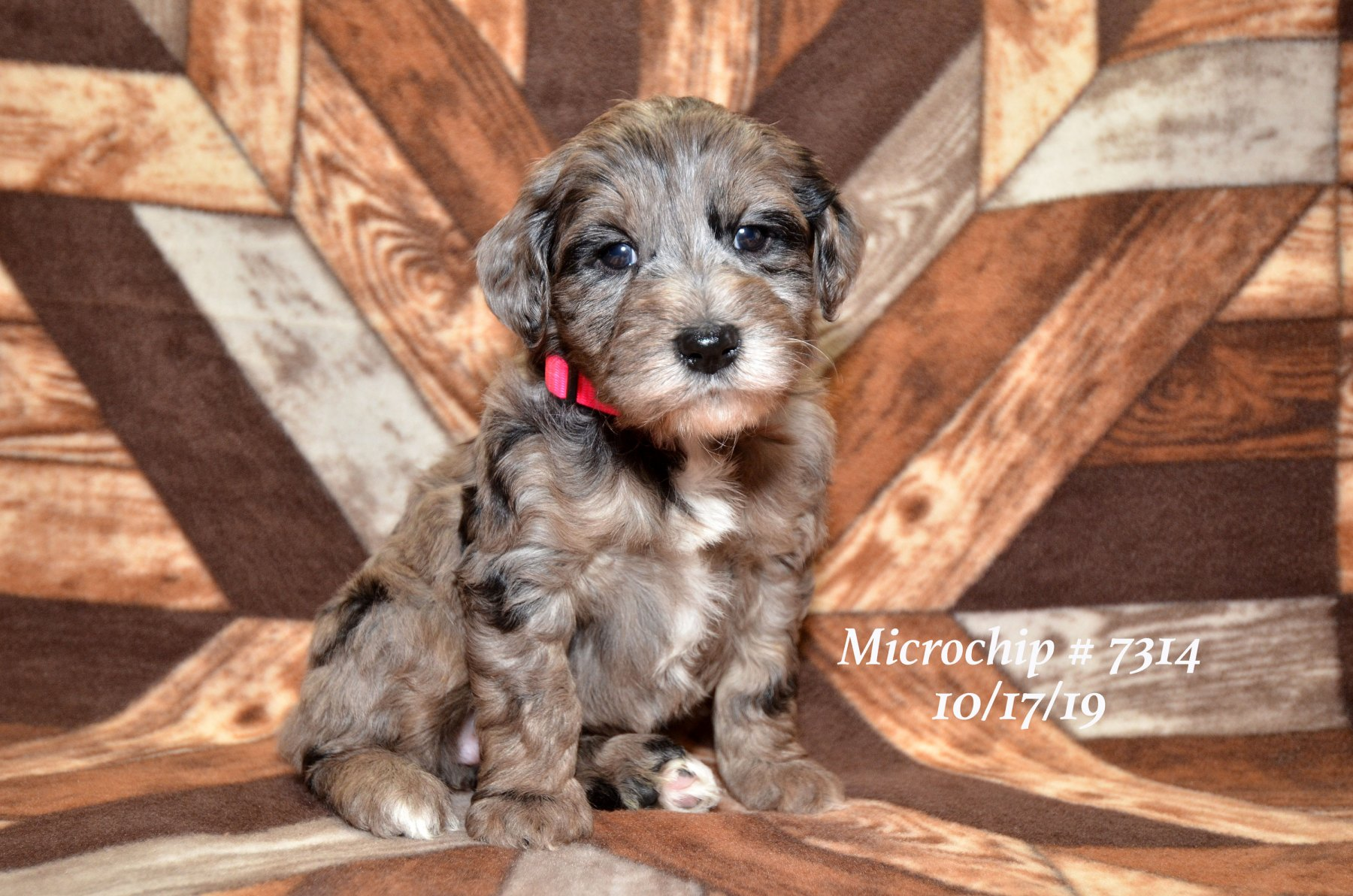 all-pups-10-15_2842