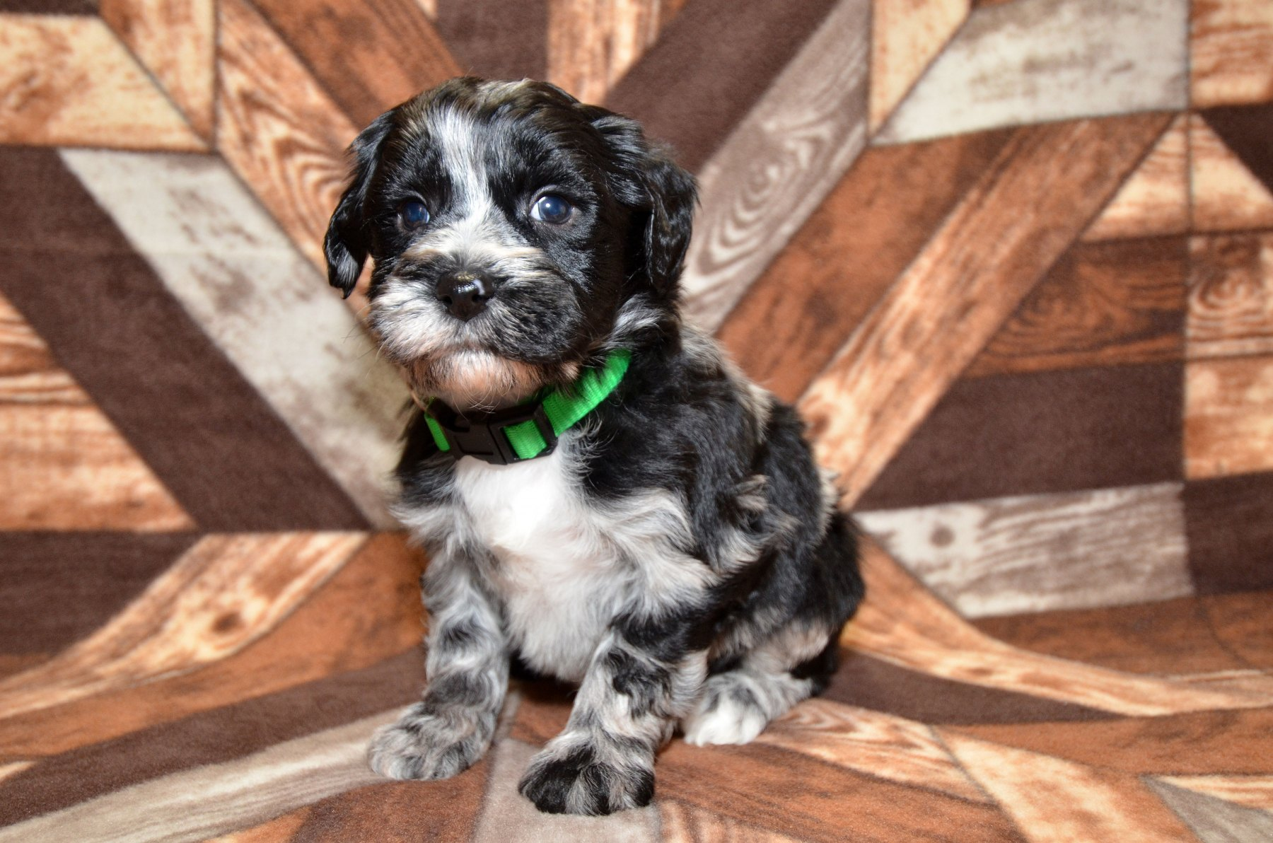 all-pups-10-15_2857