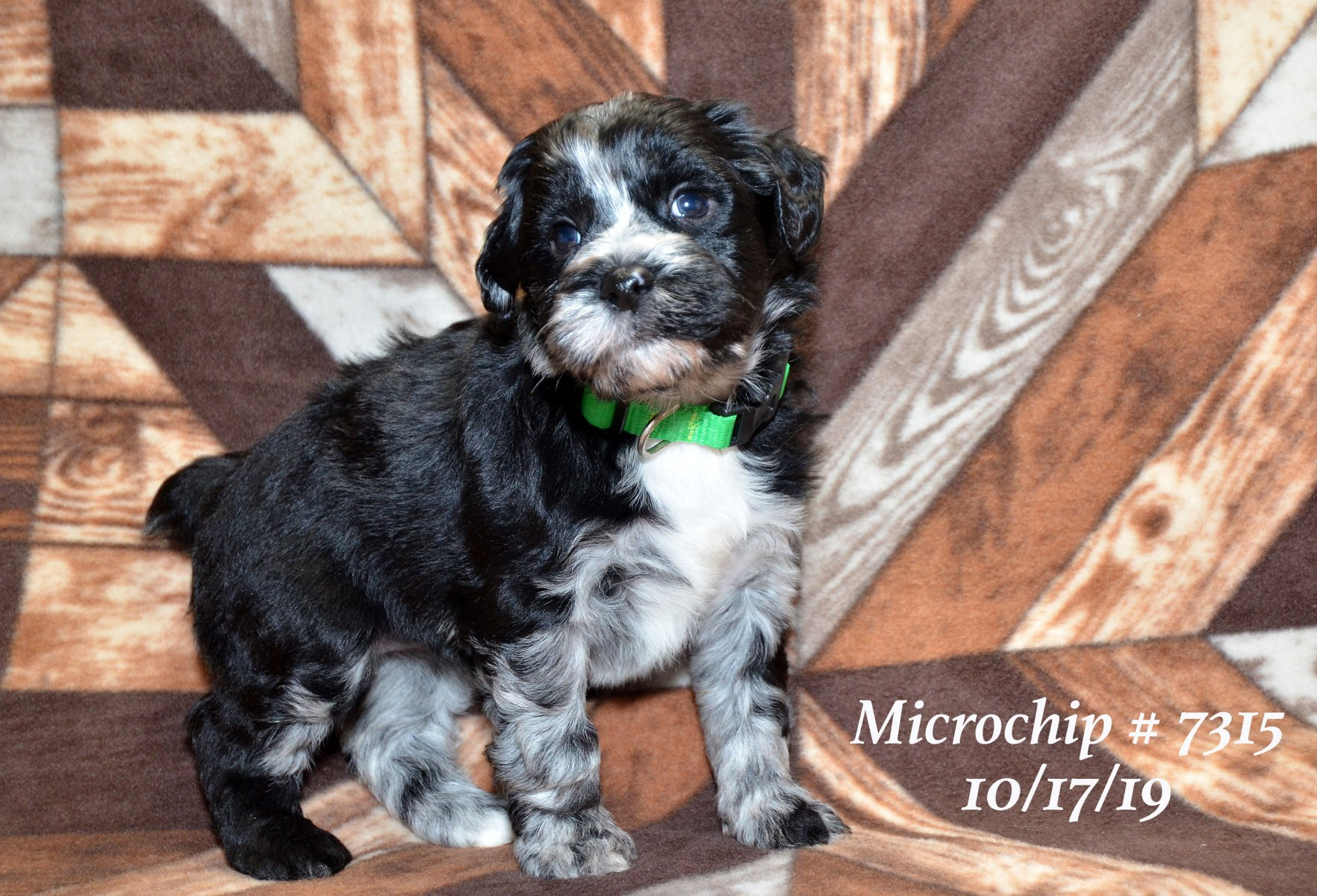 all-pups-10-15_2875