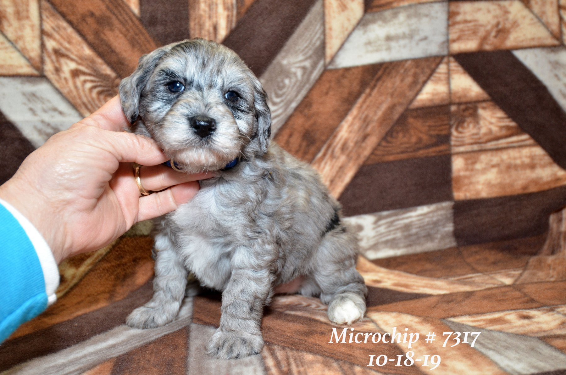 all-pups-10-15_2772