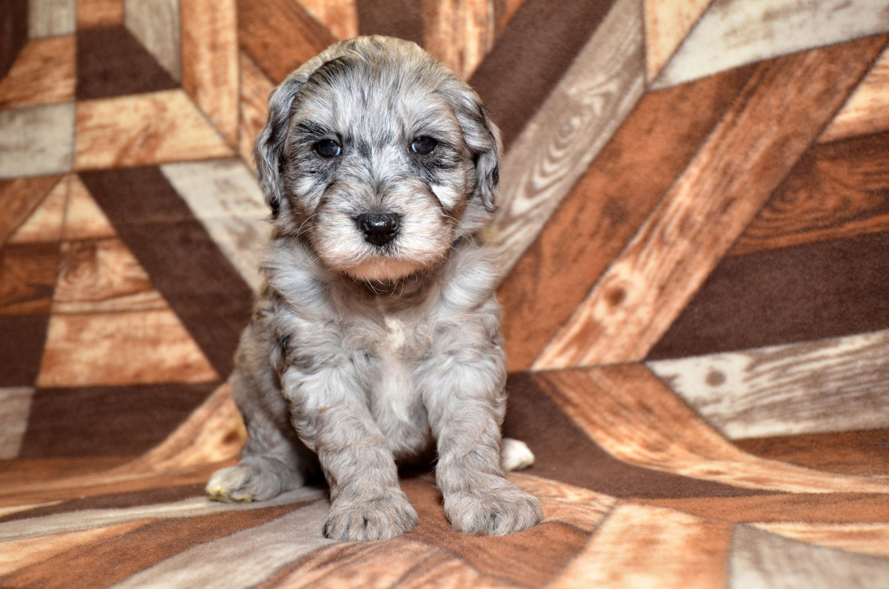 all-pups-10-15_2778