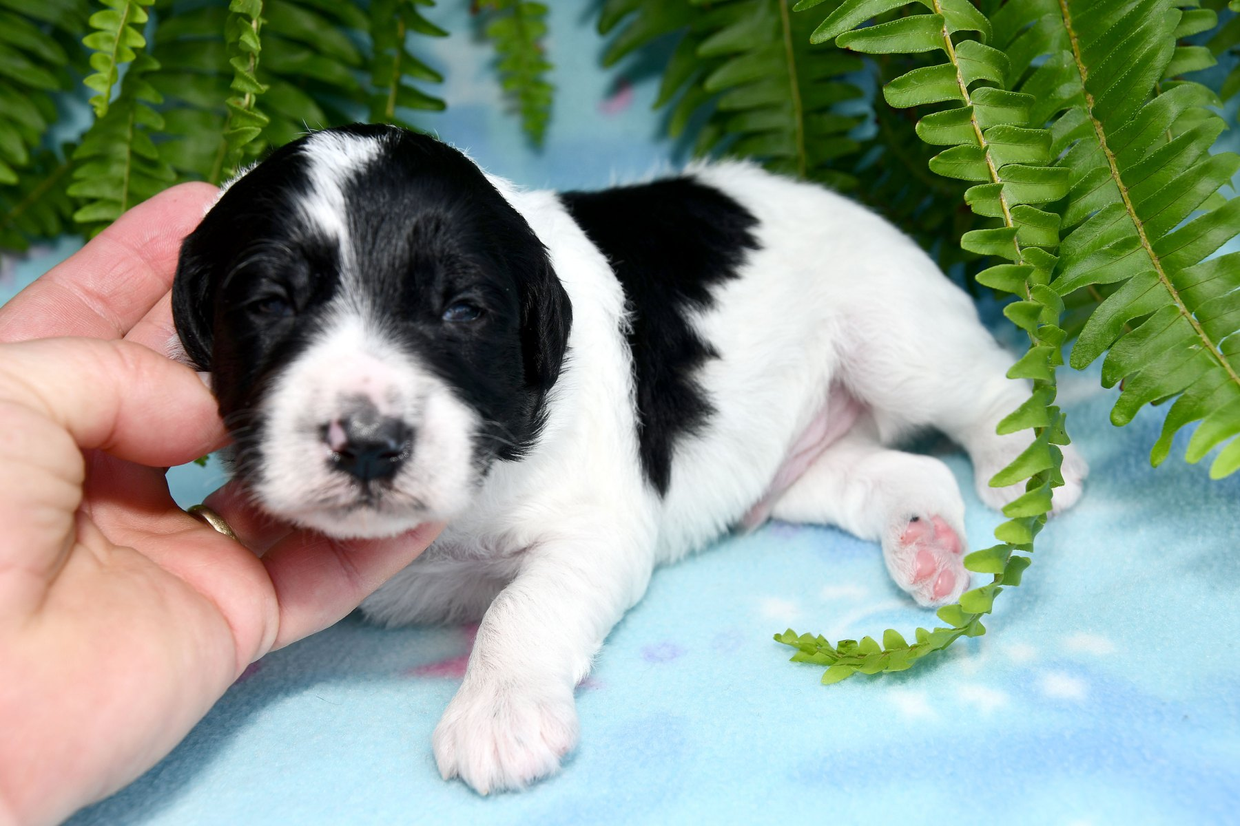 20190930_All-Pups-9-30_5807
