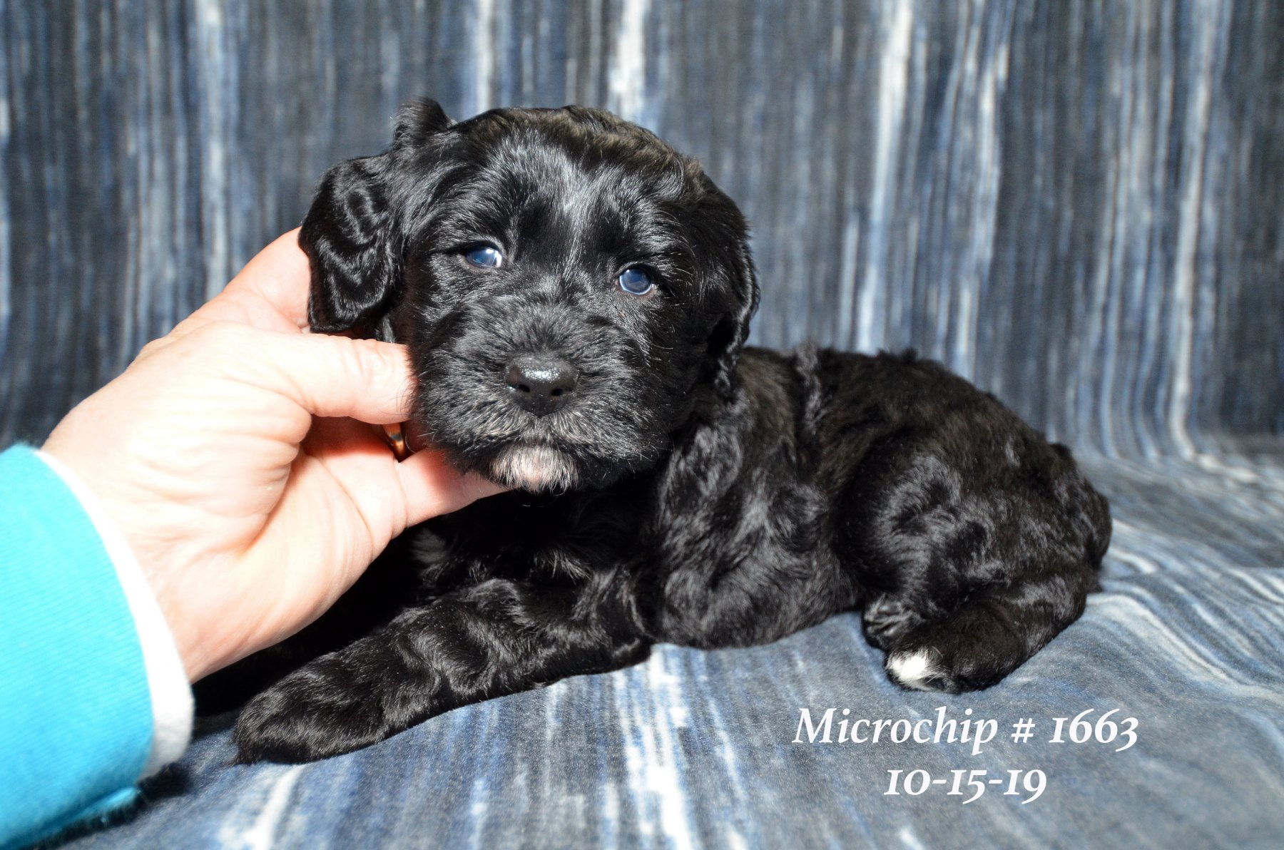 all-pups-10-15_2961
