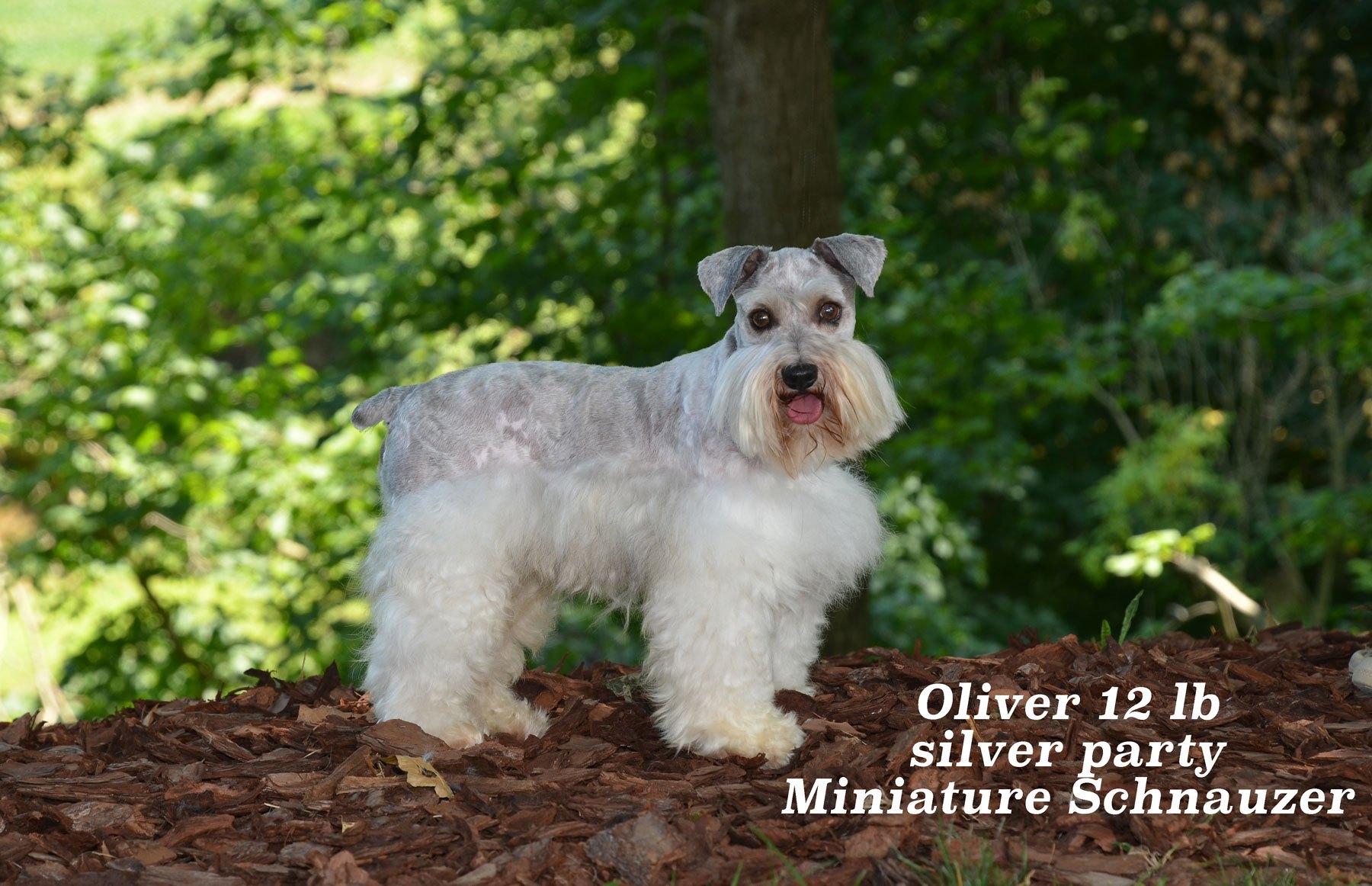 Oliver-7-8-2020_1018