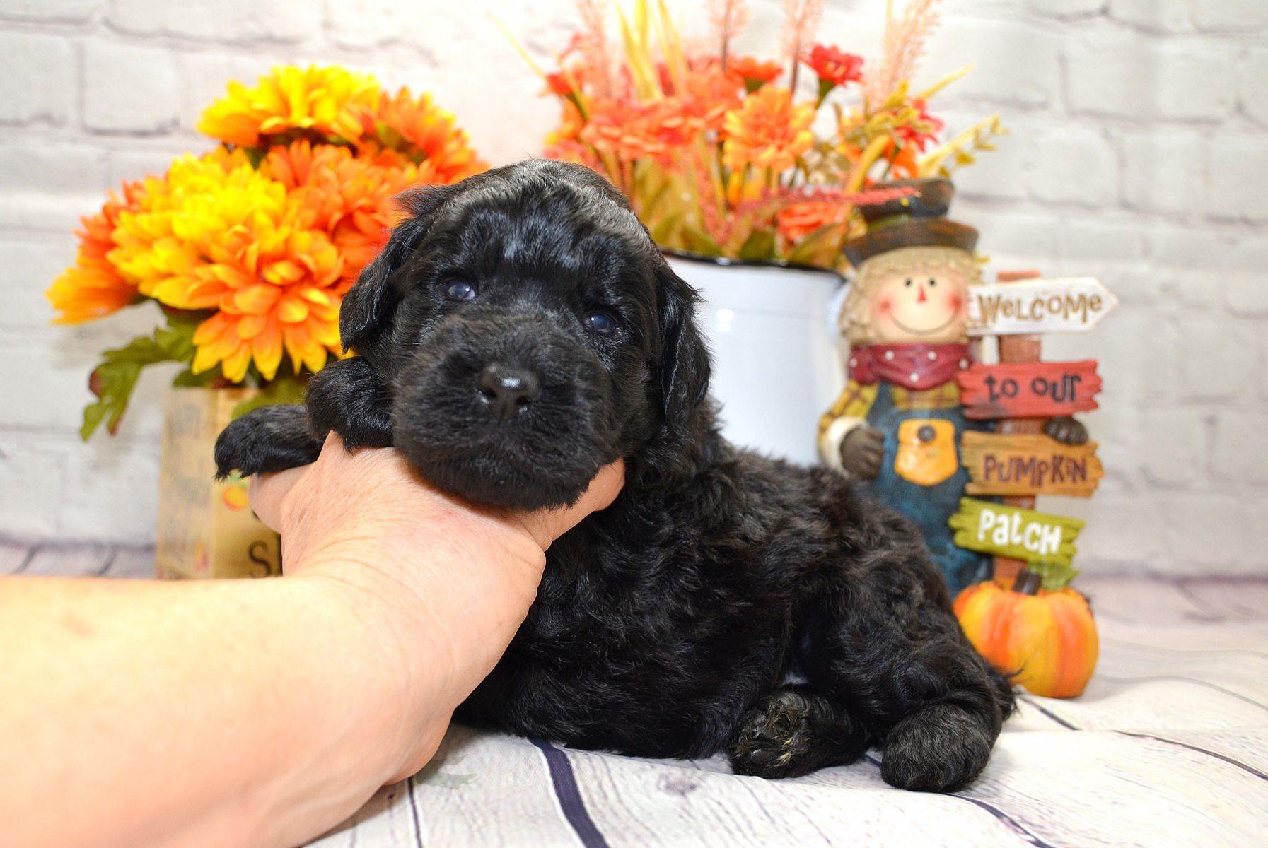 puppies-9-28-20_6617
