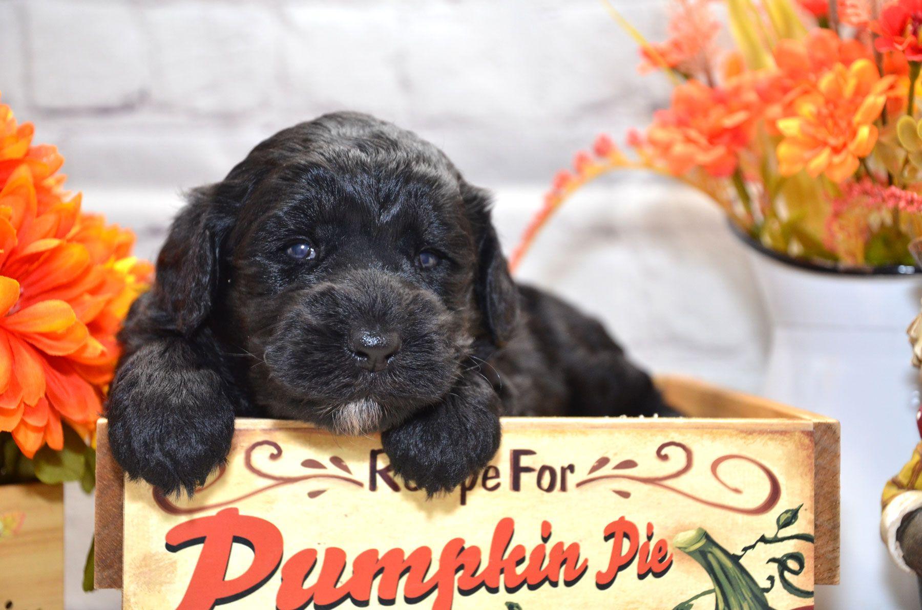 puppies-9-28-20_6658