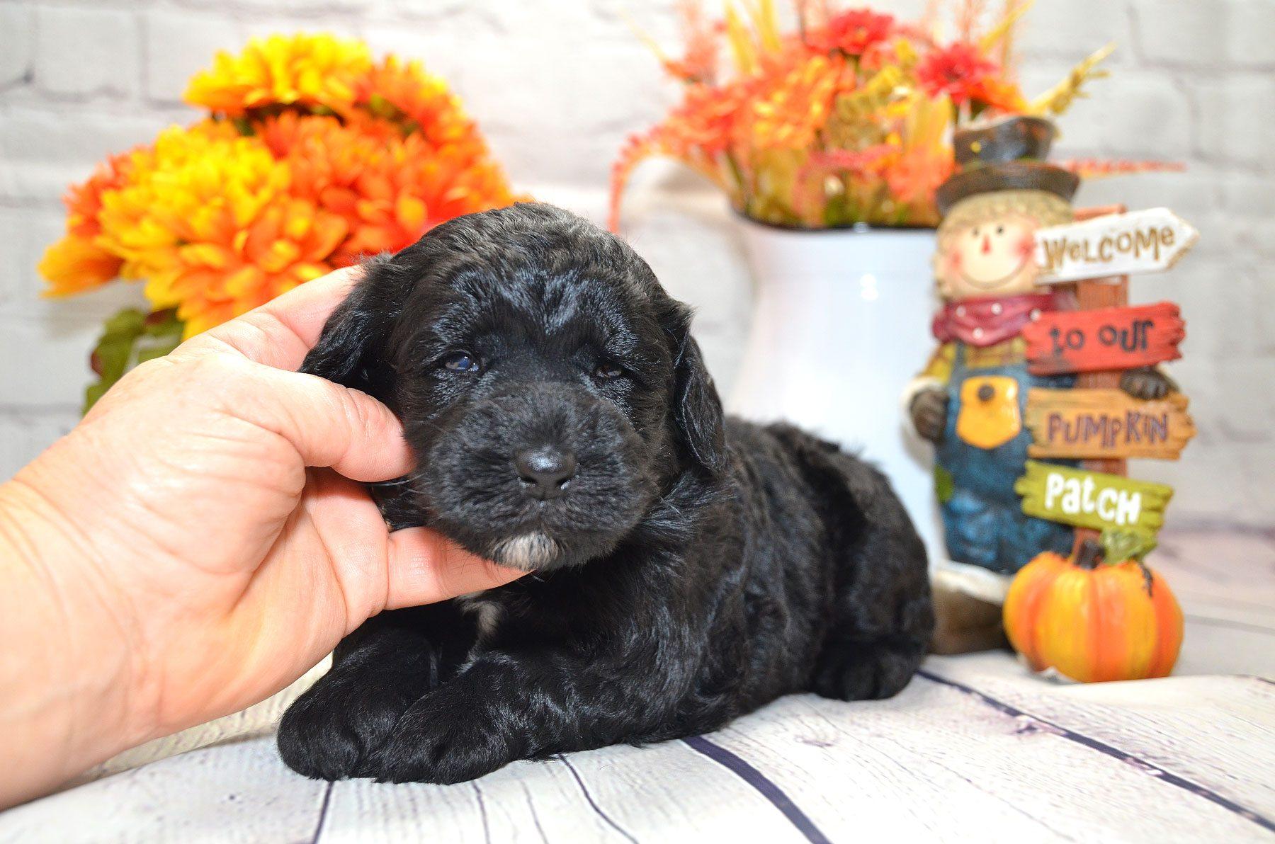 puppies-9-28-20_6664