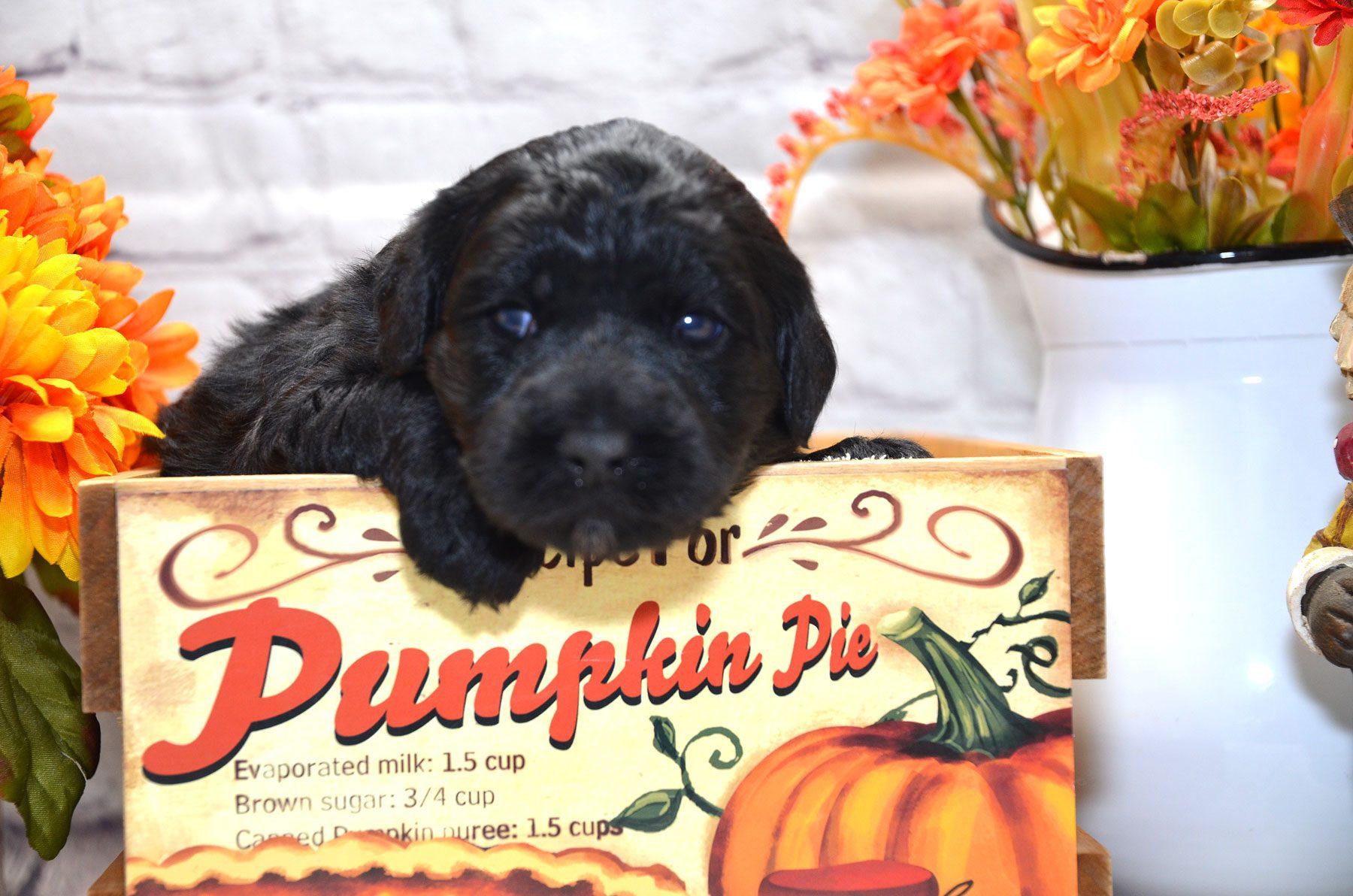 puppies-9-28-20_6685