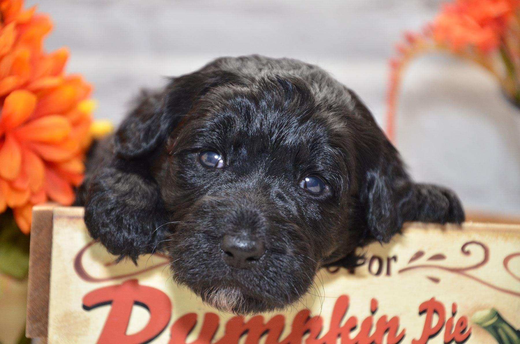 puppies-9-28-20_6673