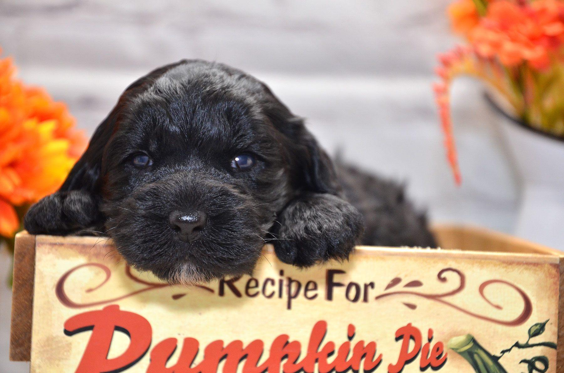 puppies-9-28-20_6638