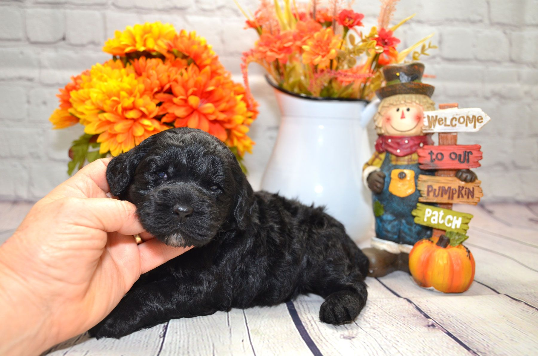 puppies-9-28-20_6643