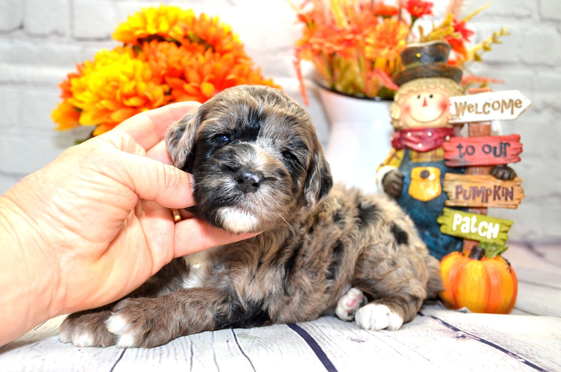 puppies-9-28-20_6633