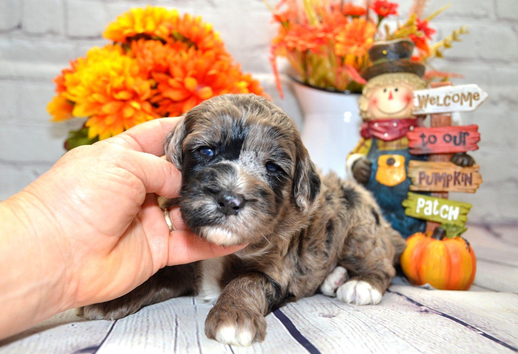 puppies-9-28-20_6635