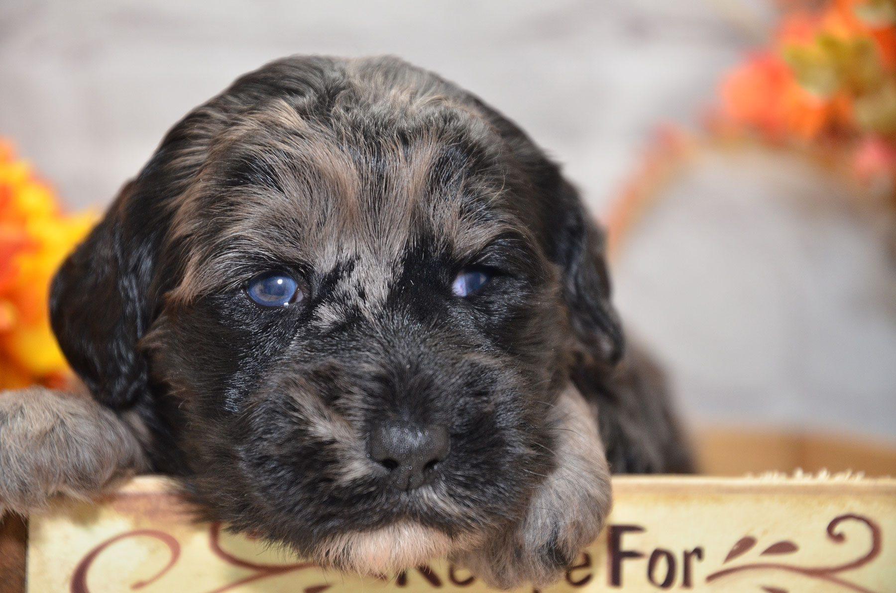 puppies-9-28-20_6715