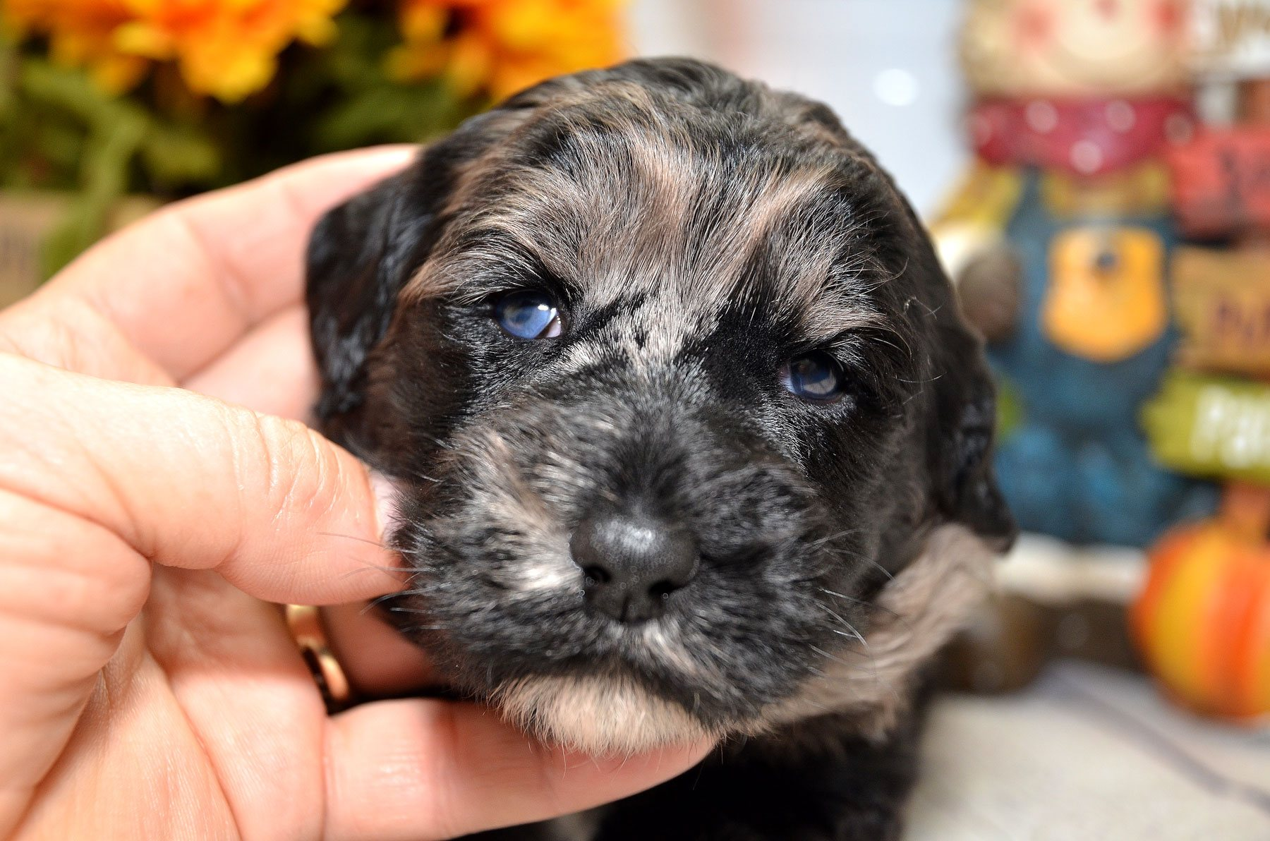 puppies-9-28-20_6727