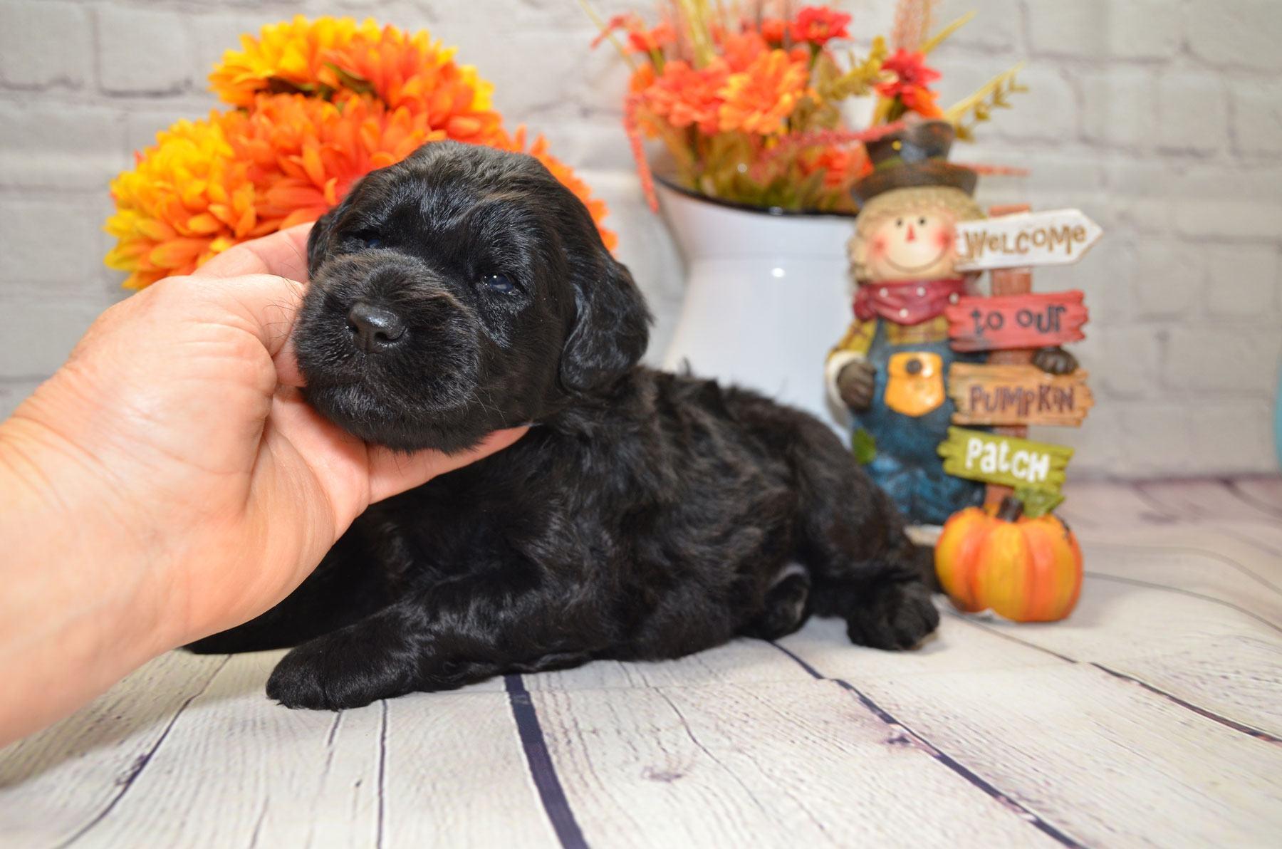 puppies-9-28-20_6610