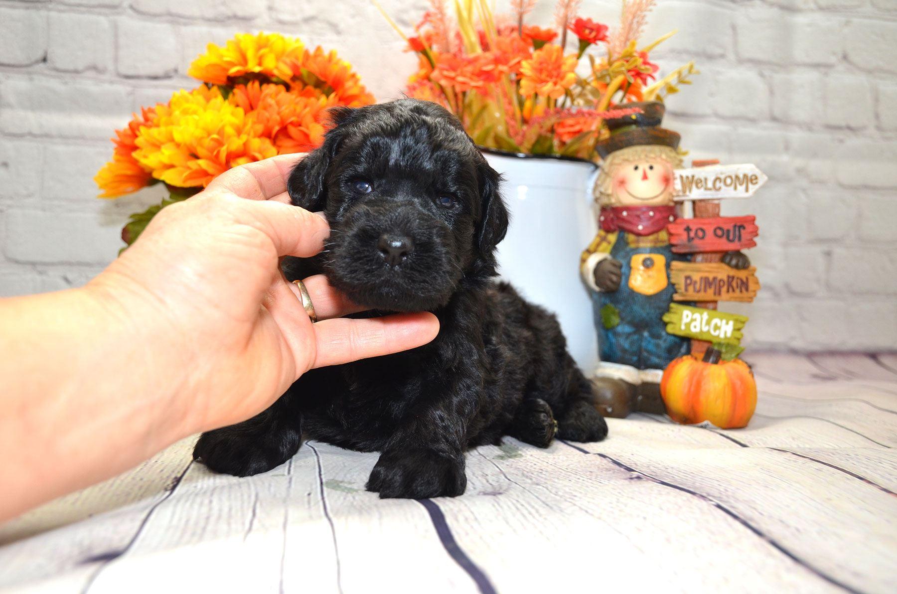 puppies-9-28-20_6620