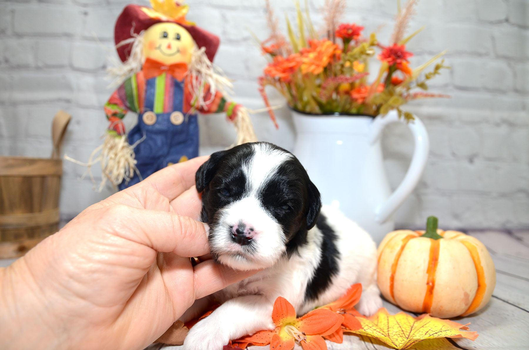 puppies-9-28-20_6767