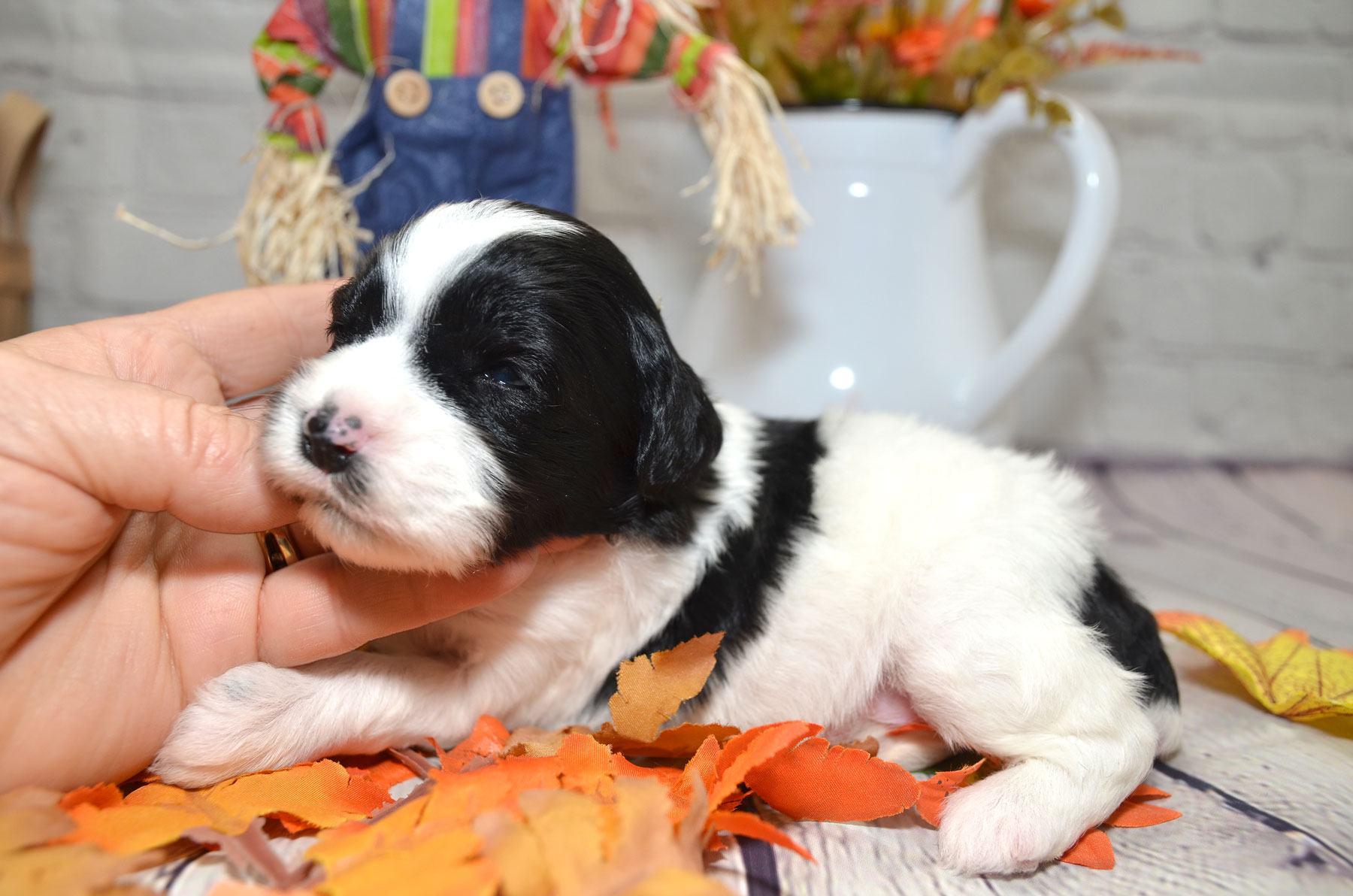 puppies-9-28-20_6777