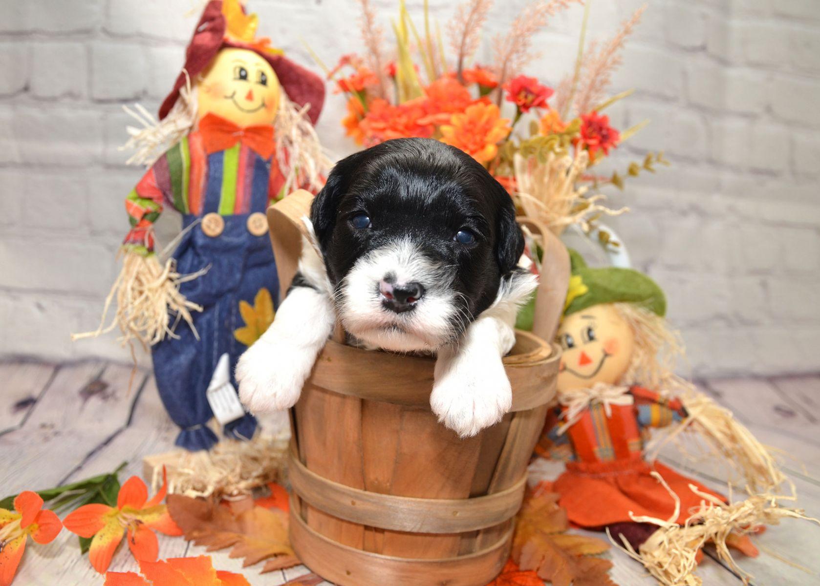 puppies-9-28-20_6827