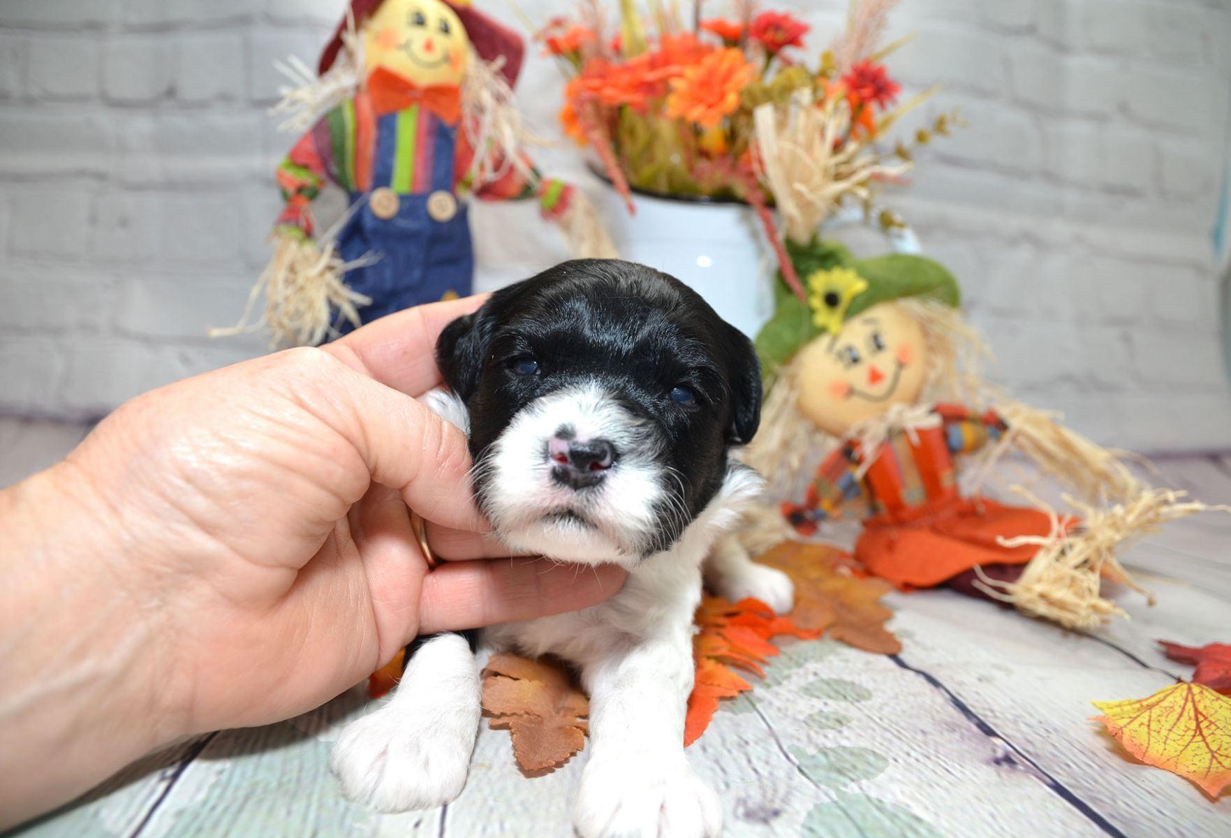 puppies-9-28-20_6833