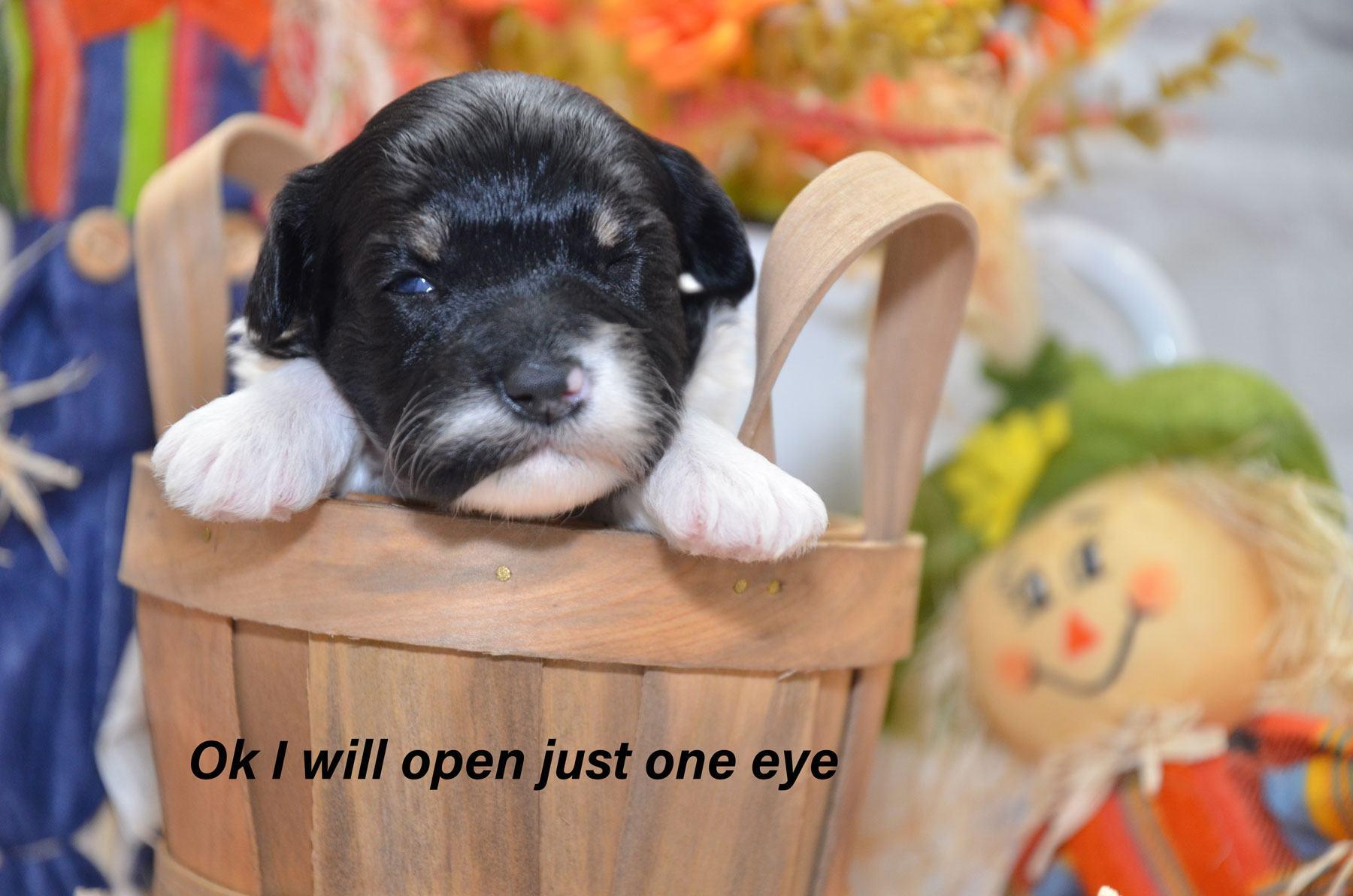 1_puppies-9-28-20_6860