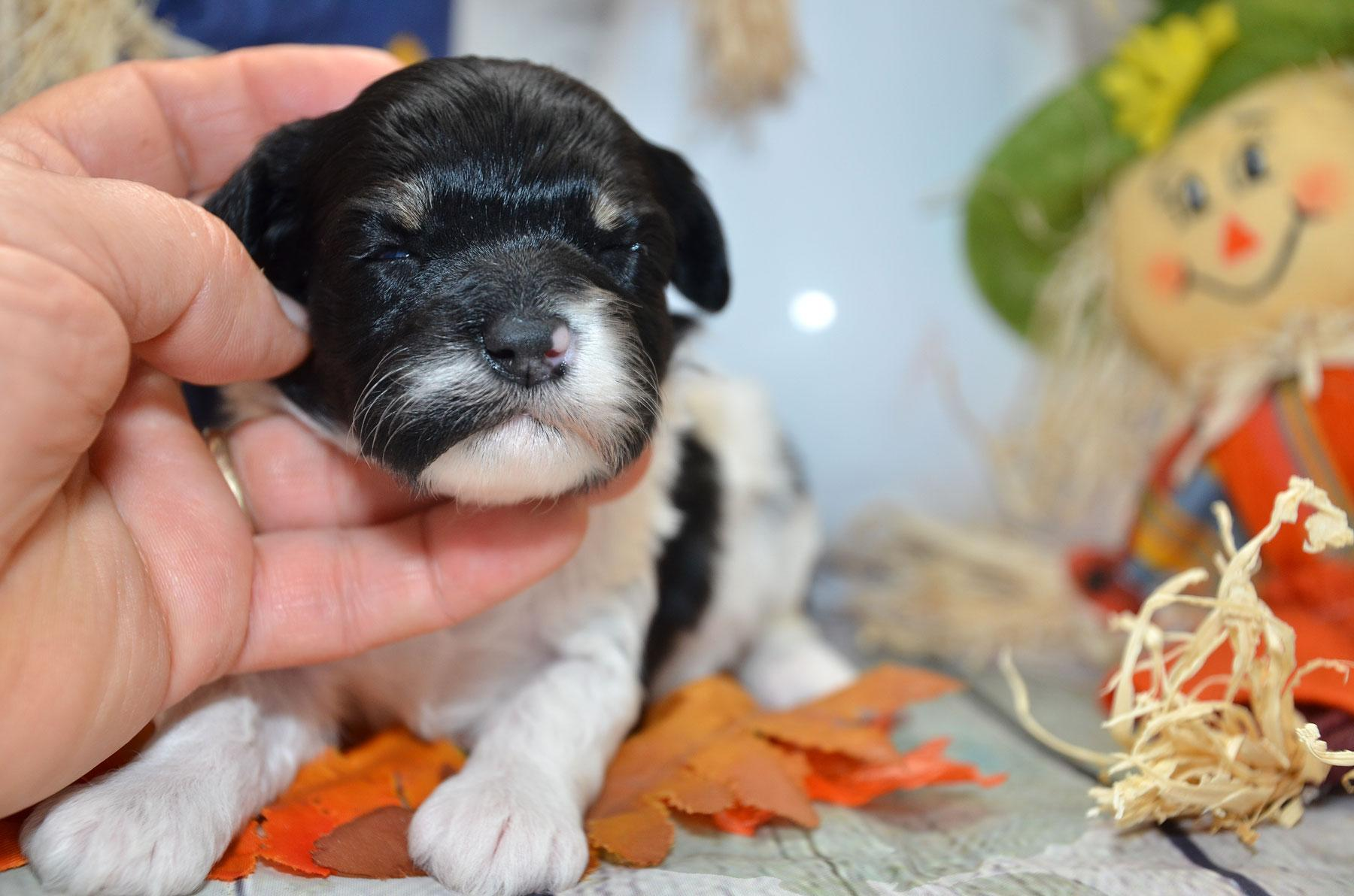 puppies-9-28-20_6863