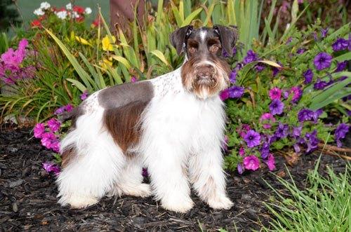 Susan-dogs_9736