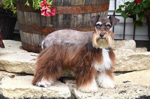 Susan-dogs_9751
