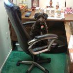 Bookkeeper-Security-Guard-Ellie.jpg